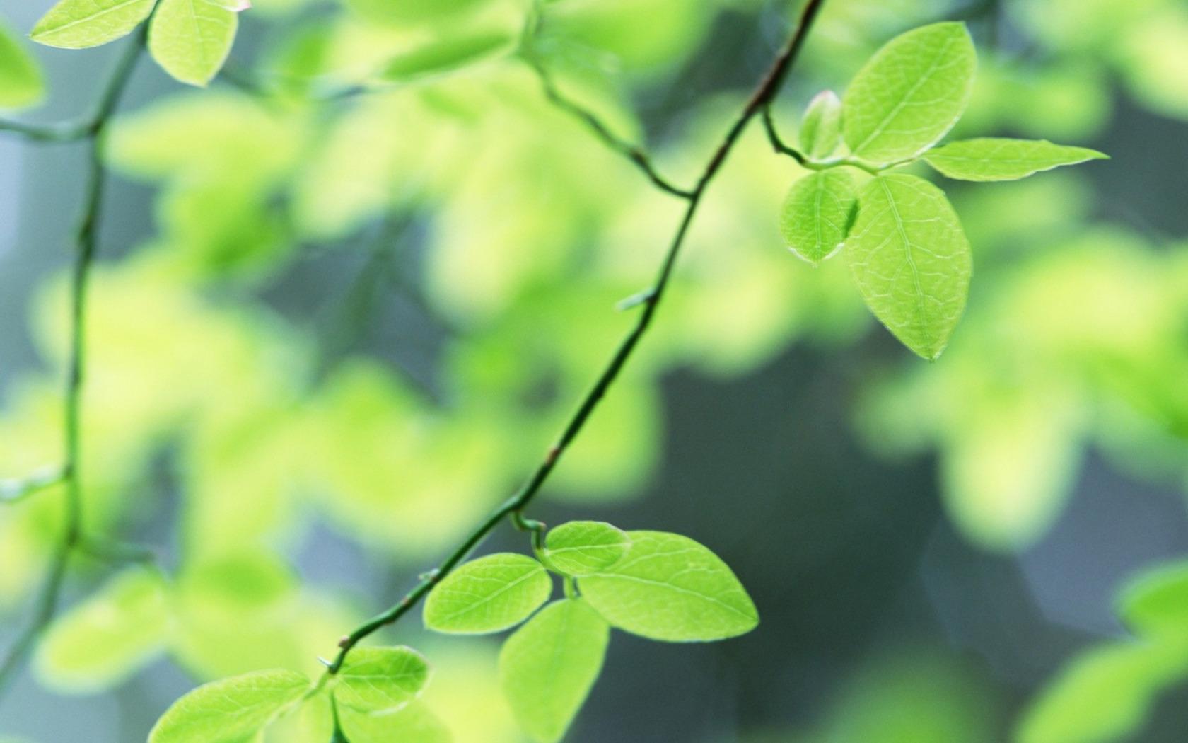 листья зелень фокус  № 1341611 бесплатно
