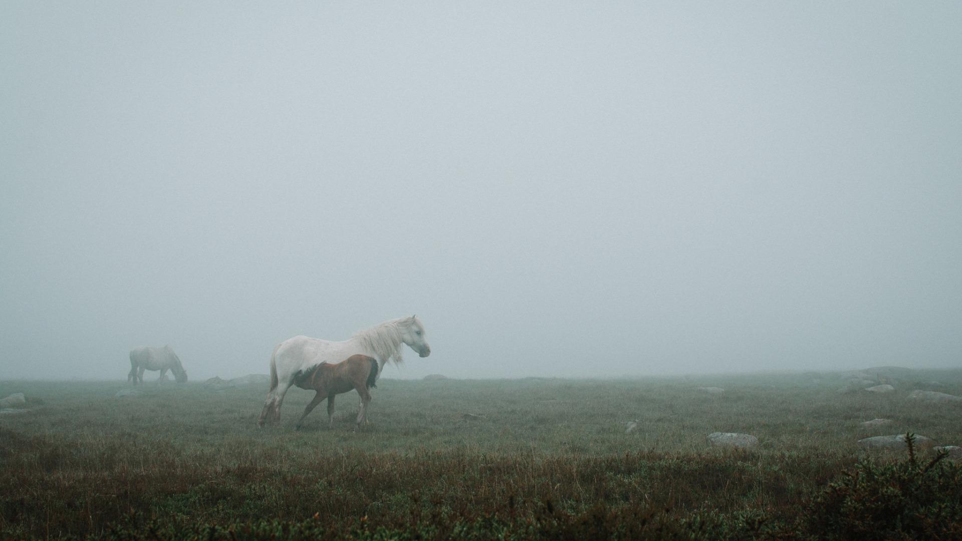 Лошади в поле  № 2021261 загрузить