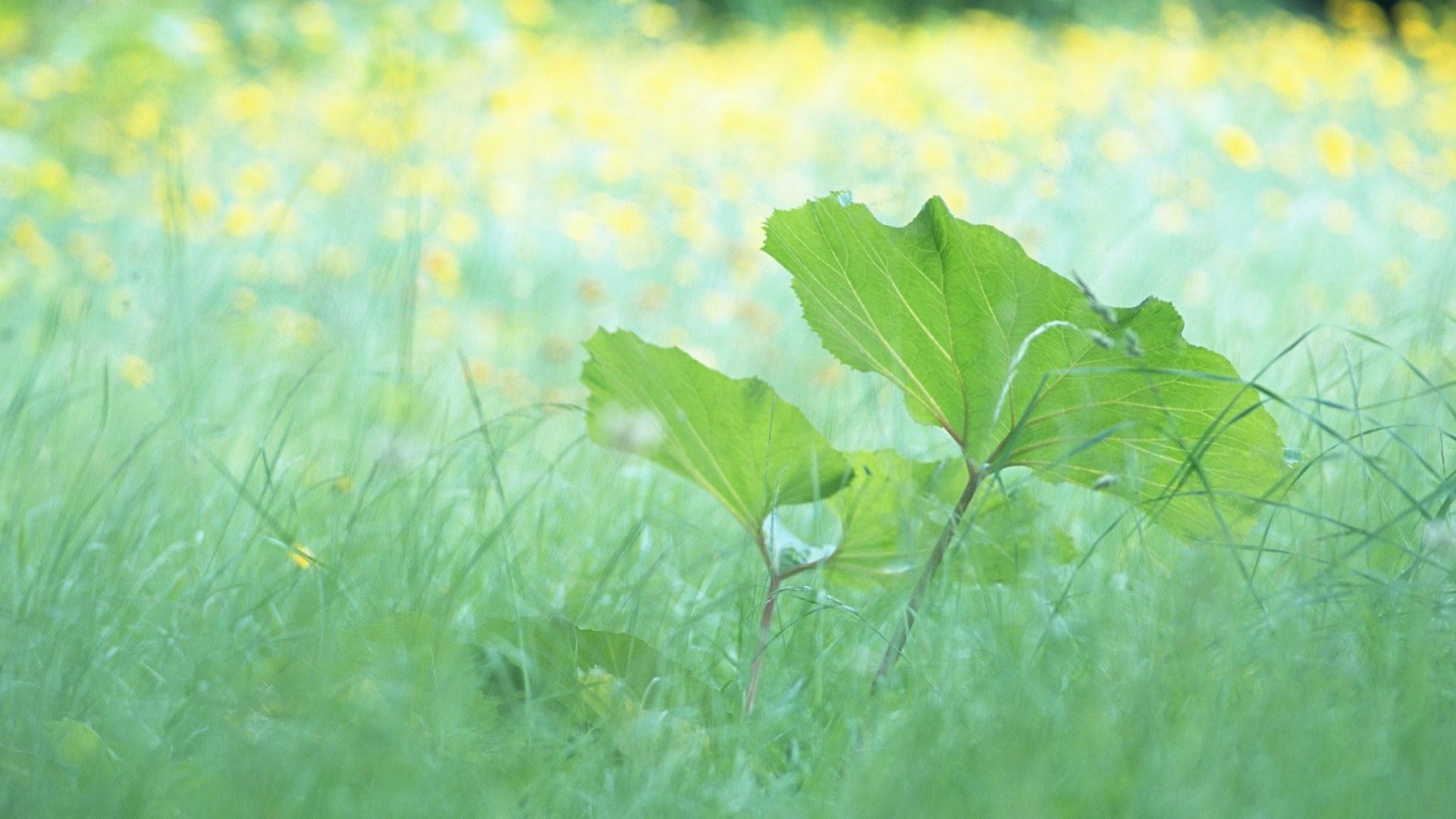 листья зелень фокус  № 1341603 без смс