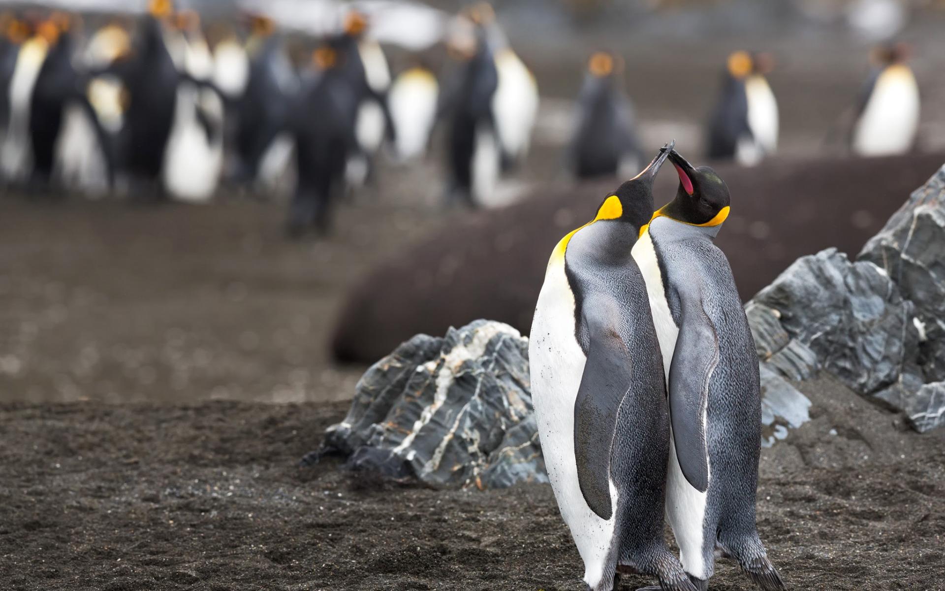 Пингвины на камушках  № 2020558  скачать