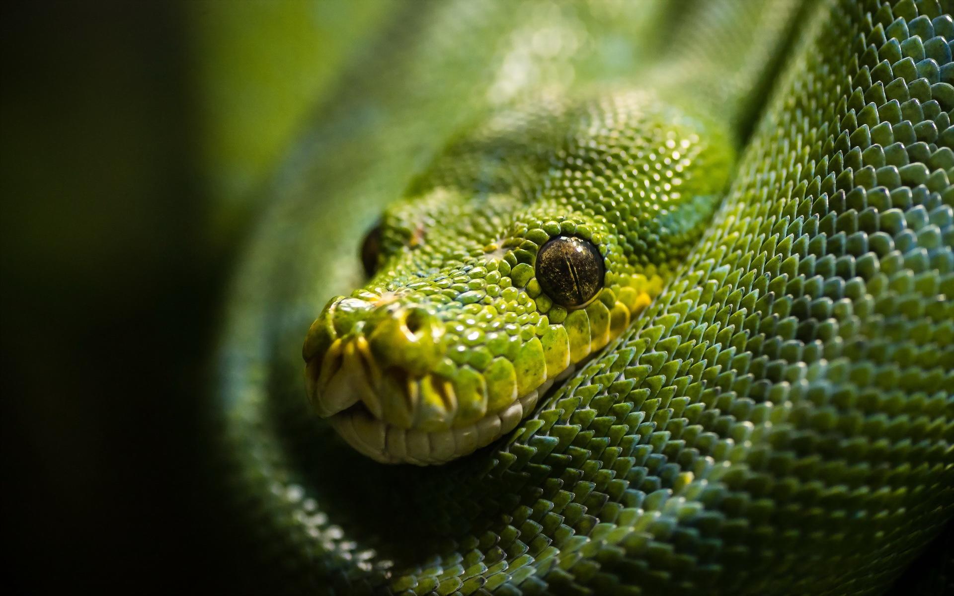 Зеленая змея макро съемка  № 3233948 без смс