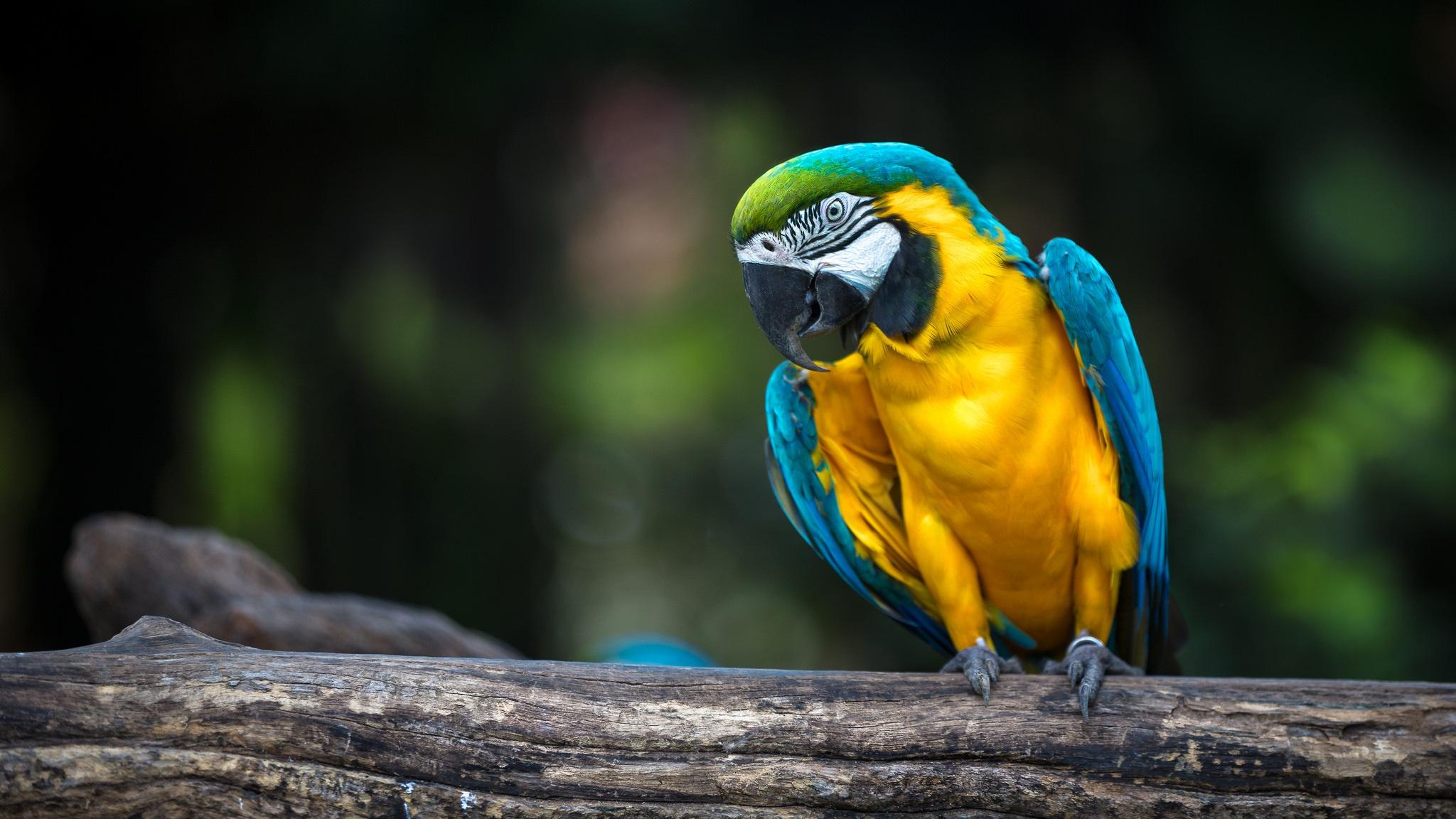 природа животные птицы попугаи  № 103494 загрузить
