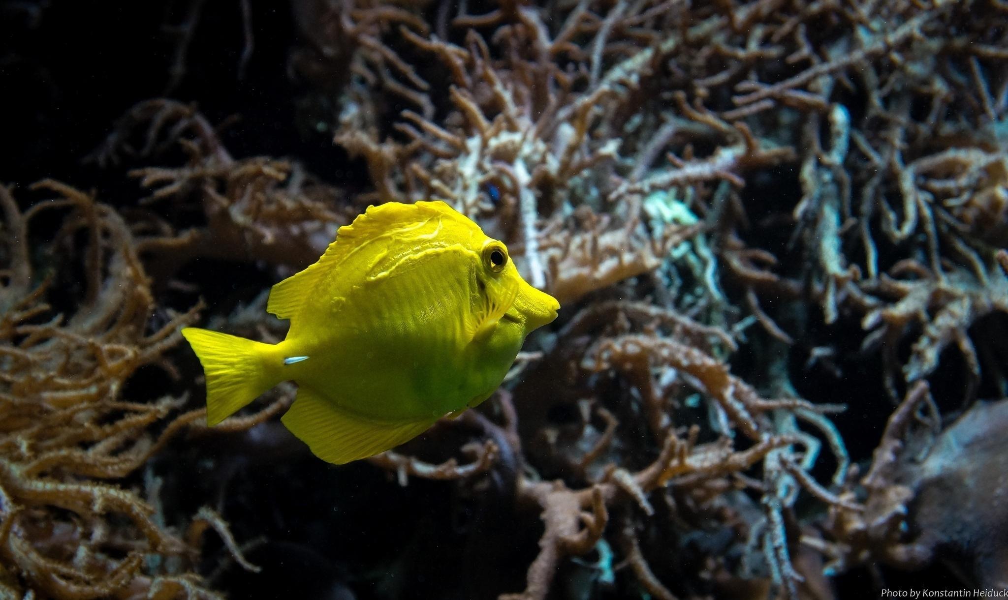Желтая Рыба макро  № 1088118 без смс