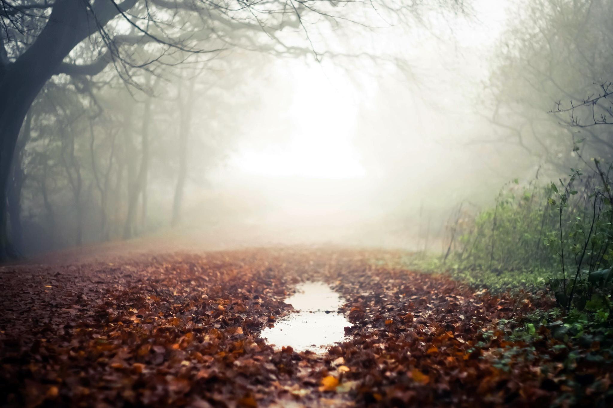 На выходных в Курской области будет дождливо и туманно