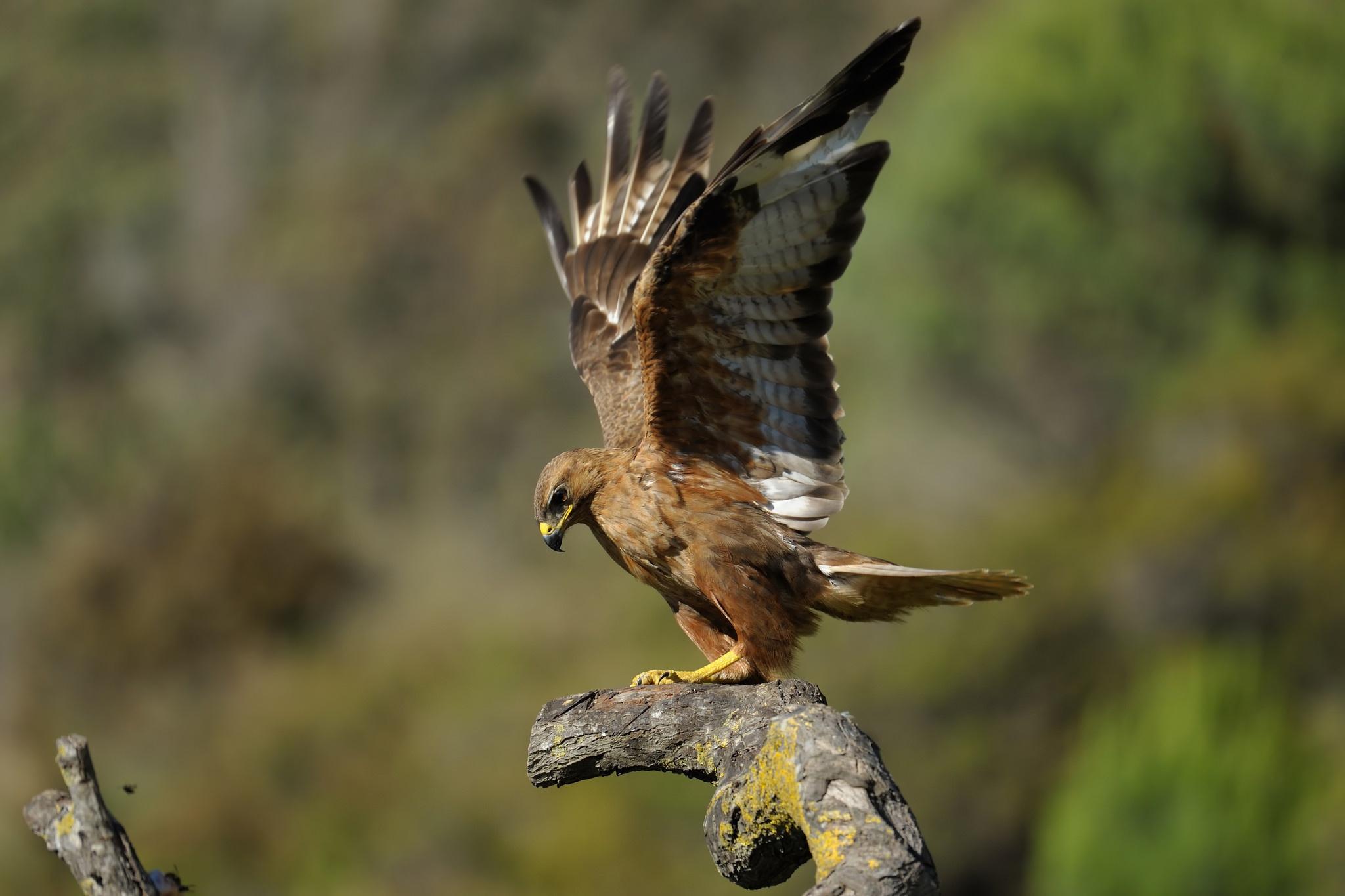 птица ветка клюв крылья  № 1996169  скачать
