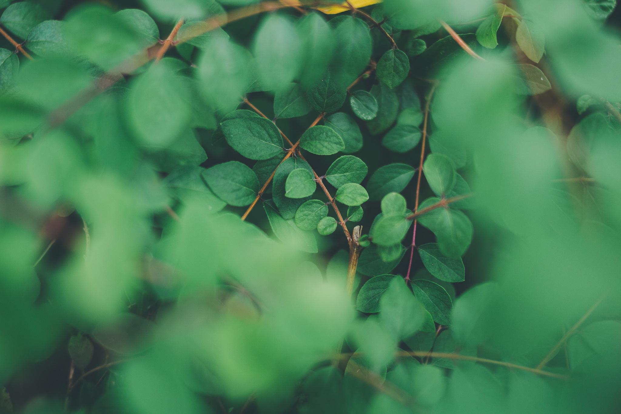 природа ветка листья nature branch leaves  № 2322 бесплатно