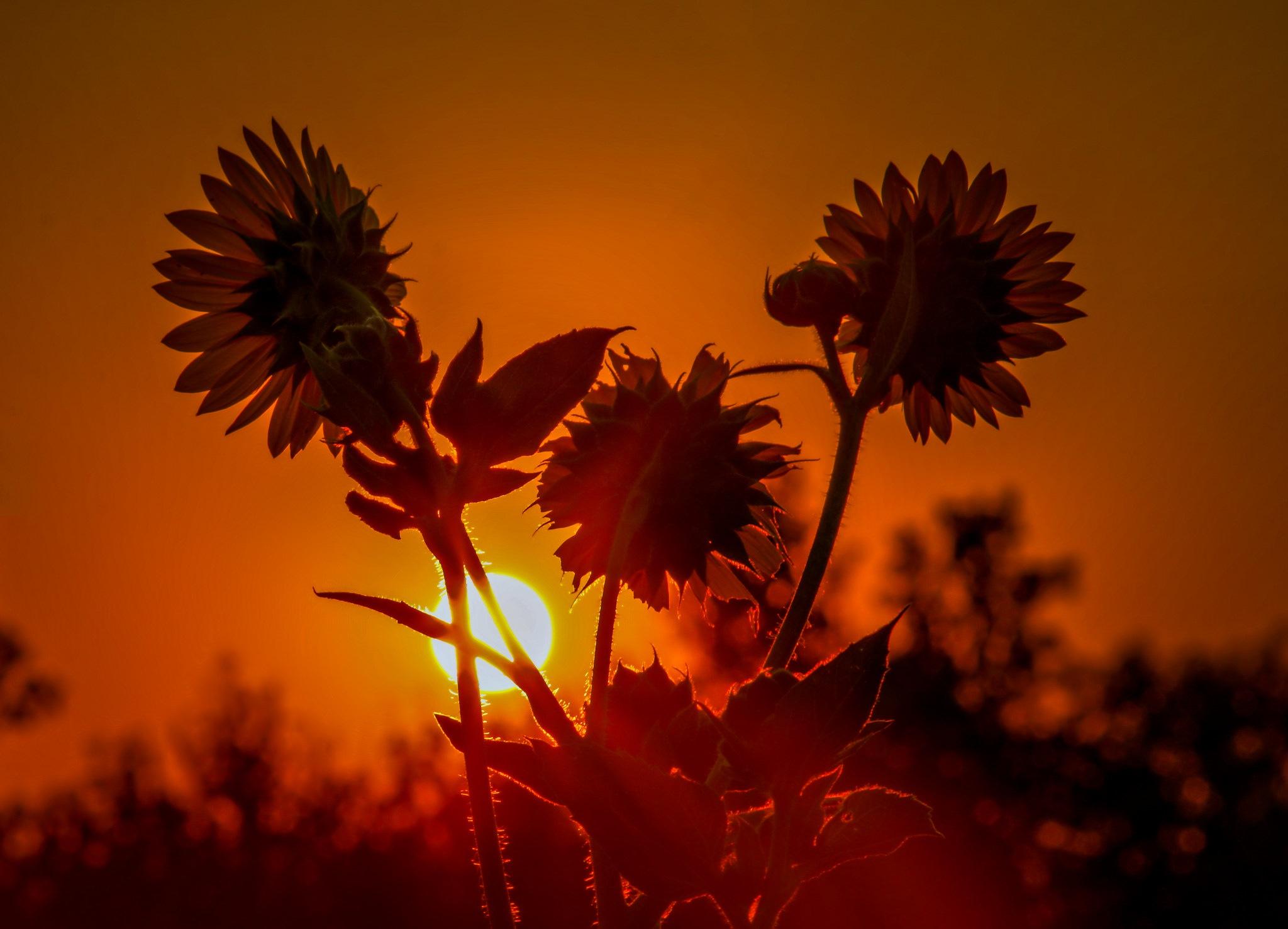 тебя любим, картинки цветы на фоне заката удачного
