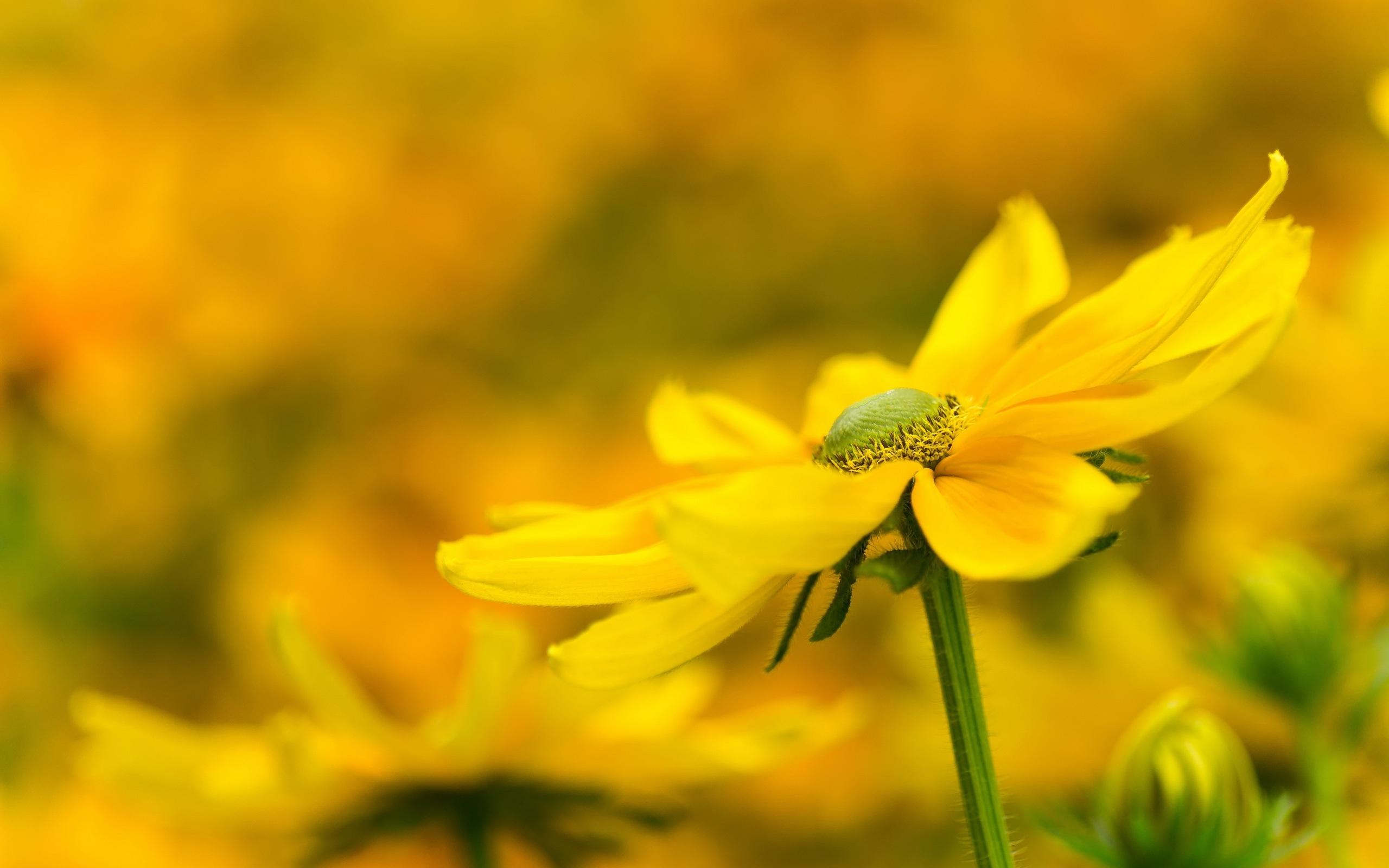 цветы макро желтые flowers macro yellow  № 910219 бесплатно
