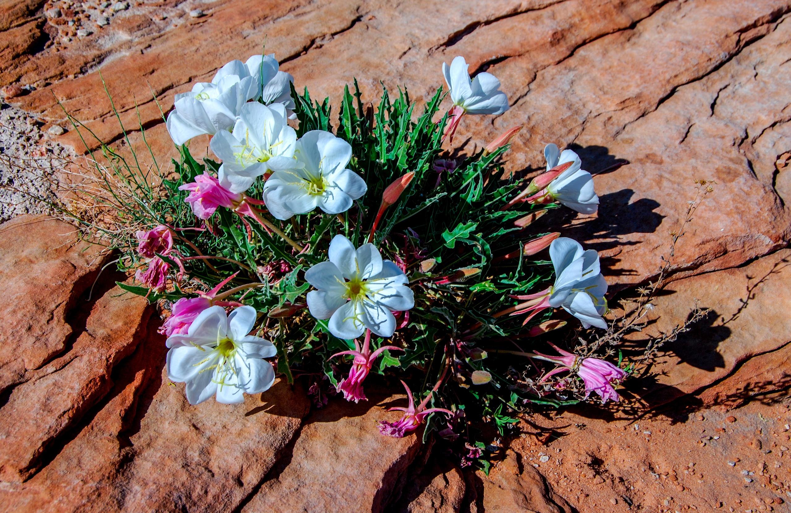 полевые цветы с белой скалы фото считаю, что