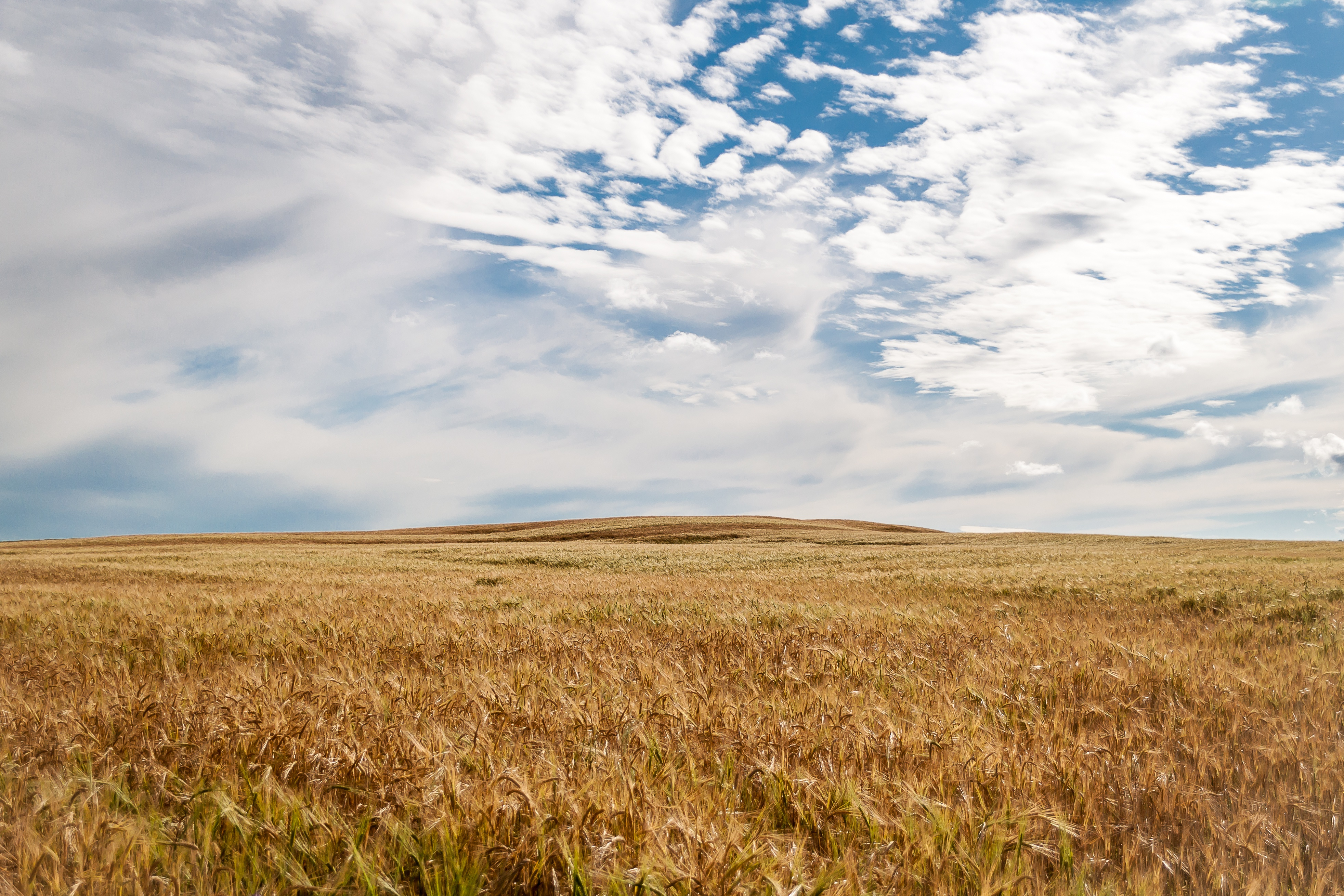 природа поле горизонт  № 3896439 загрузить