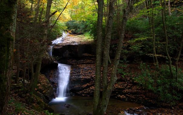 Фото обои осень, лес, деревья, ручей, камни, водопад