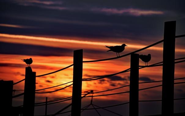 Фото обои небо, птицы, ночь