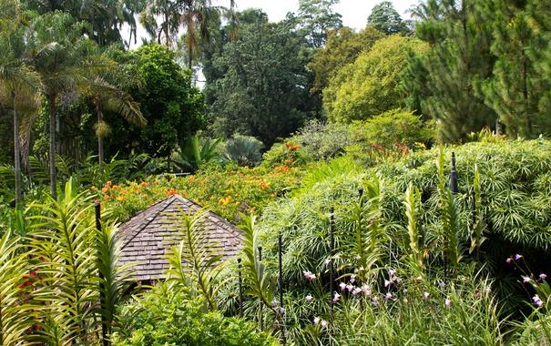 Фото обои деревья, цветы, пальмы, сад, Сингапур, кусты, Botanic Gardens