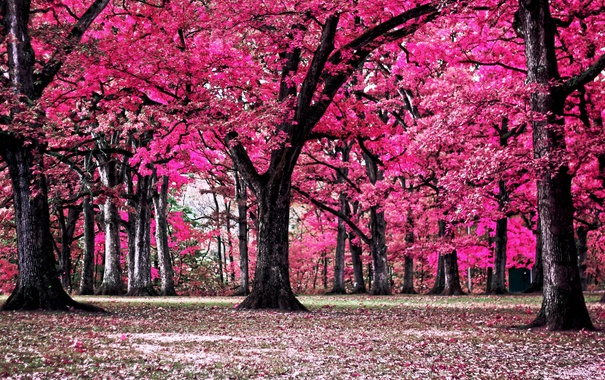Фото обои деревья, природа, парк