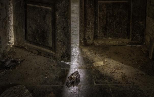 Фото обои фон, птица, дверь, натурализм