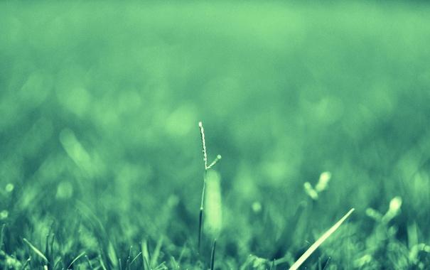 Фото обои зелень, лето, трава, травинка
