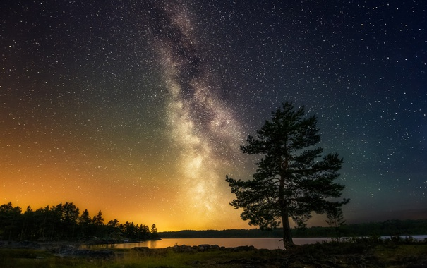 Фото обои небо, звезды, пейзаж, природа, дерево