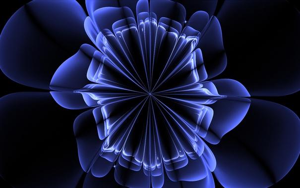 Фото обои лепестки, свет, линии, цветок