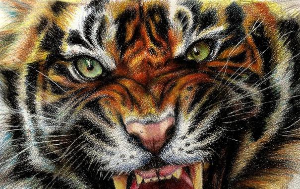 Фото обои тигр, tiger, арт