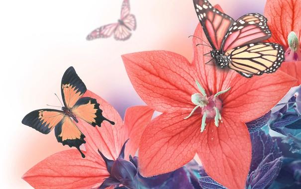 Фото обои листья, бабочки, лепестки, колокольчик, цветение