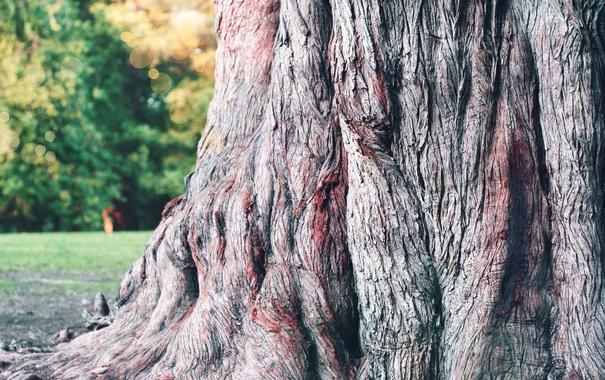Фото обои wood, tree, bark