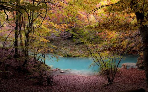 Фото обои forest, river, trees, autumn, foliage