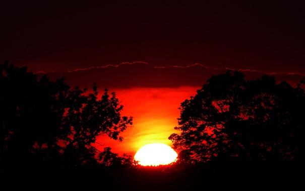 Фото обои небо, солнце, деревья, закат, тучи, силуэт