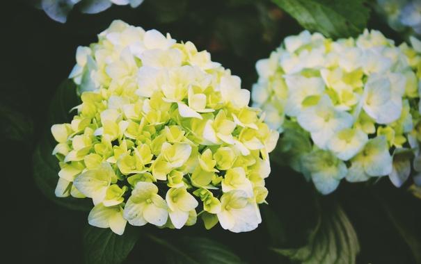 Фото обои цветы, желтые, лепестки, белые