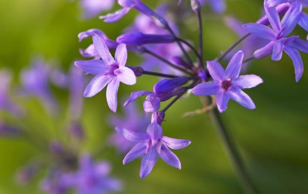 Фото обои макро, природа, растение, лепестки, стебель, соцветие