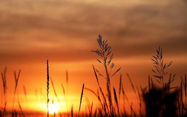 Фото обои облака, закат, стебли, куст, силуэт, оранжевый небо