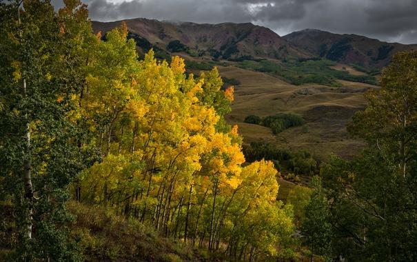 Фото обои осень, листья, деревья, горы, тучи, краски, склон