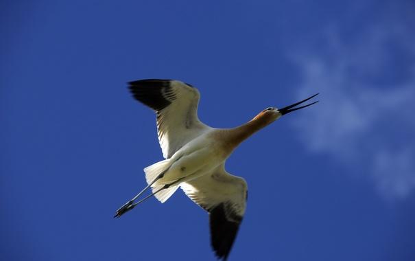 Фото обои небо, птица, полёт