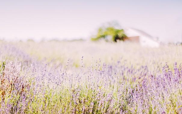 Фото обои поле, цветы, природа