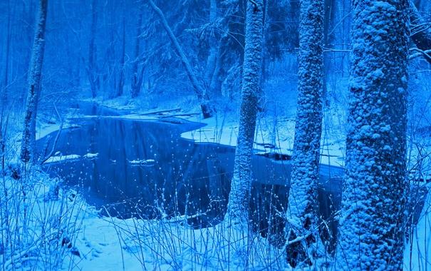 Фото обои зима, лес, снег, Польша, Беловежская пуща, река Лютовня
