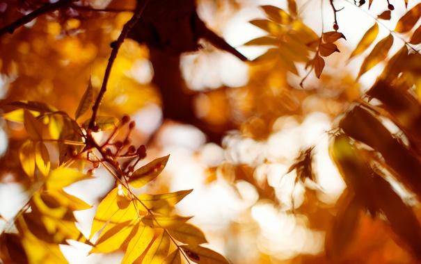 Фото обои осень, листья, оранжевые