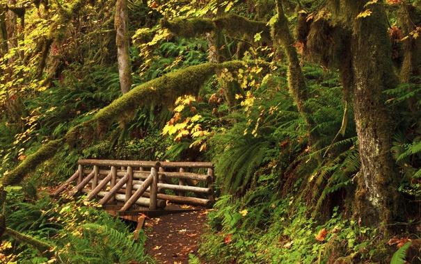Фото обои лес, деревья, США, мостик, тропинка, кусты, Oregon