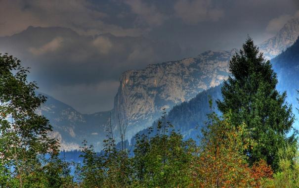 Фото обои листья, деревья, горы, ветки, Австрия, леса, Salzburg