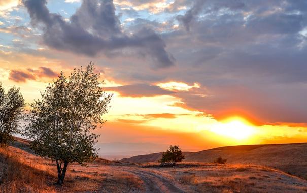 Фото обои дерево, утро, дорога