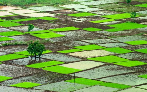 Фото обои Индия, рисовые поля, Ратнагири, Махараштра