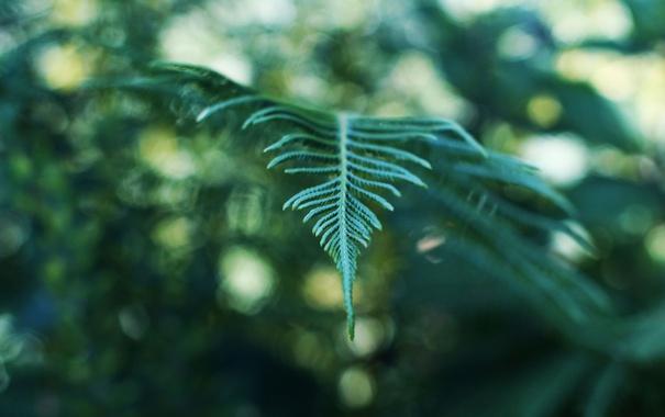 Фото обои листья, растение, ветка