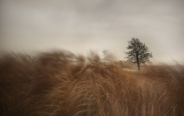 Фото обои поле, трава, дерево, ветер