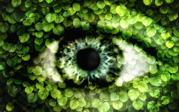 Фото обои листья, природа, глаз