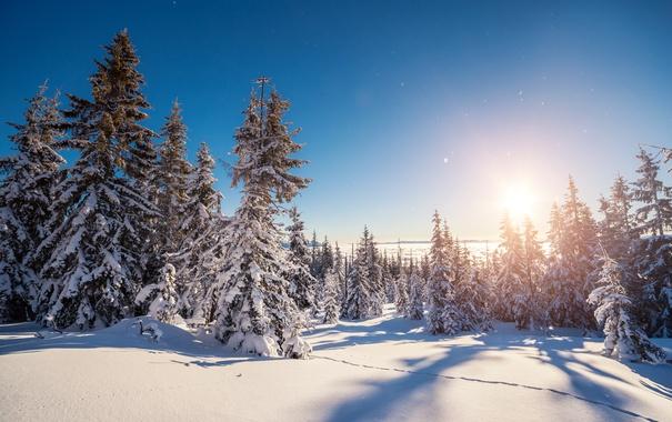 Фото обои зима, лес, снег, снежинки, елка, nature, winter