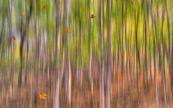 Фото обои осень, лес, листья, деревья