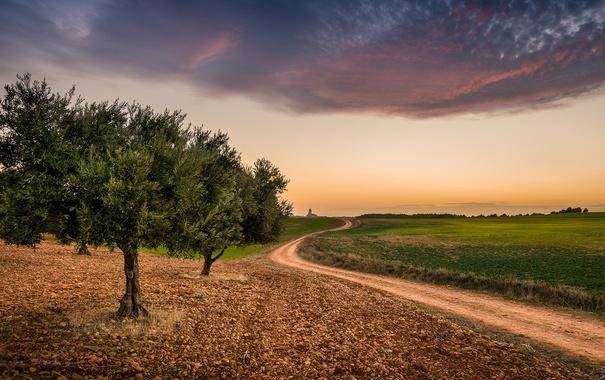 Фото обои дорога, поле, деревья