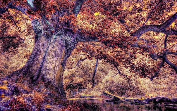 Фото обои листья, ветки, природа, дерево