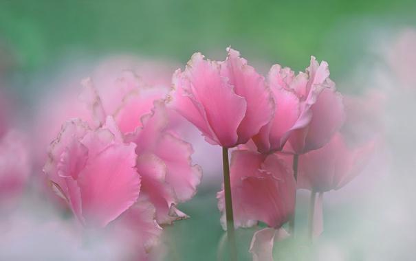 Фото обои природа, краски, лепестки, стебель