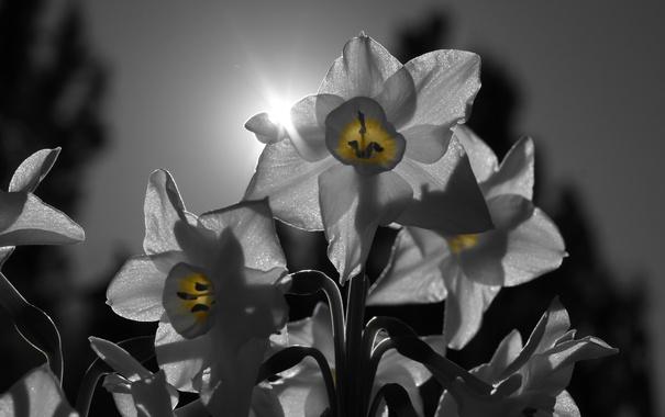 Фото обои солнце, лучи, свет, природа, лепестки, соцветие
