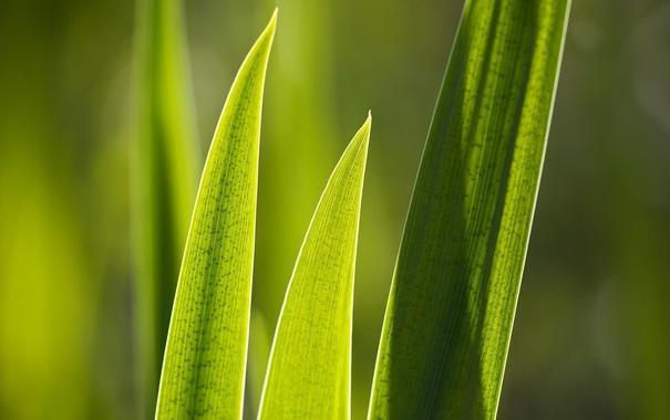 Фото обои зелень, листок, растения