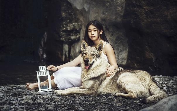Фото обои фон, собака, девочка